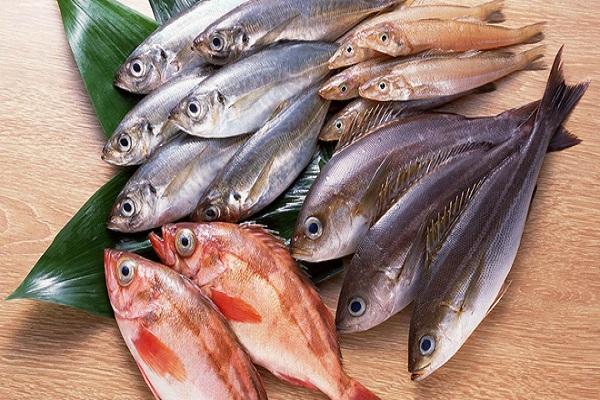 Cá chứa nhiều protein và các dưỡng chất tốt cho người giảm cân